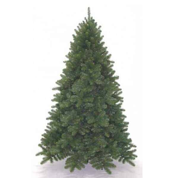 Undecorated Scandia Spruce Christmas tree